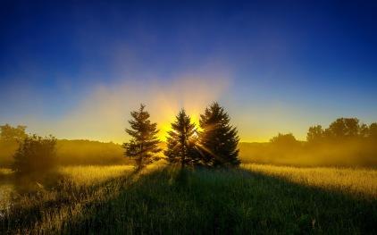 Sunrise-Trees