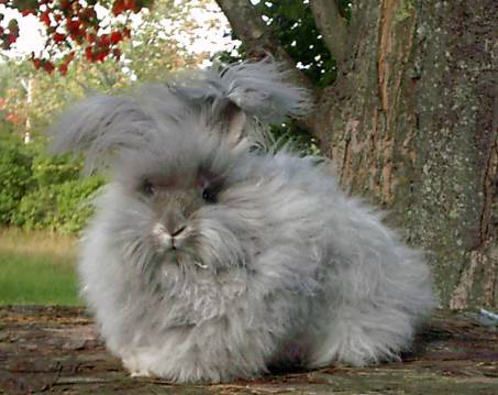 https://serpent77.files.wordpress.com/2015/04/fluffy-bunny.jpg
