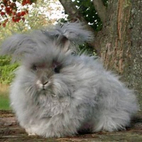 Fluffy Bunnies in Paganism